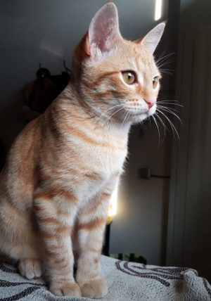 kiwi-gato-testimonios-comunicacionanimal